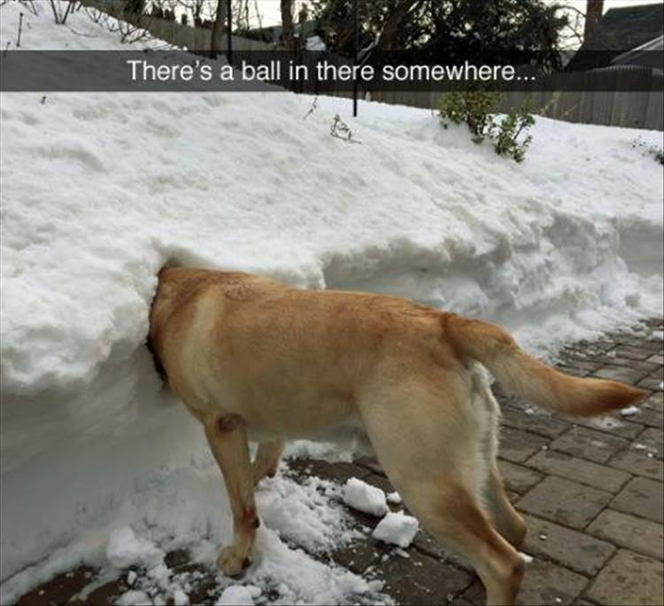 Image result for funny animals in the snow images