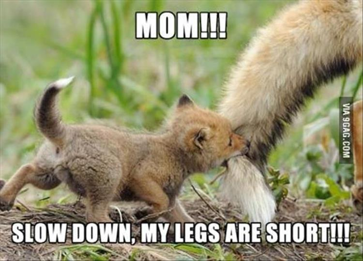 Cute And Funny Animals Pictures With Words