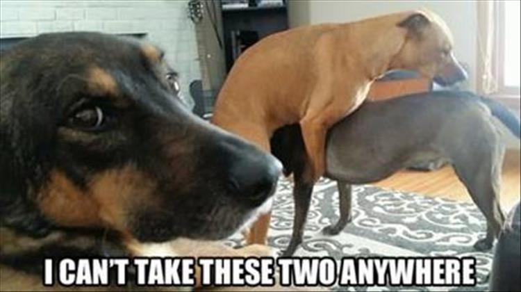 Funny Friday Night Meme : Funny animal pictures of the day 24 pics