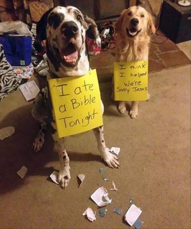 Funny Partners In Crime Animal Edition 31 Pics