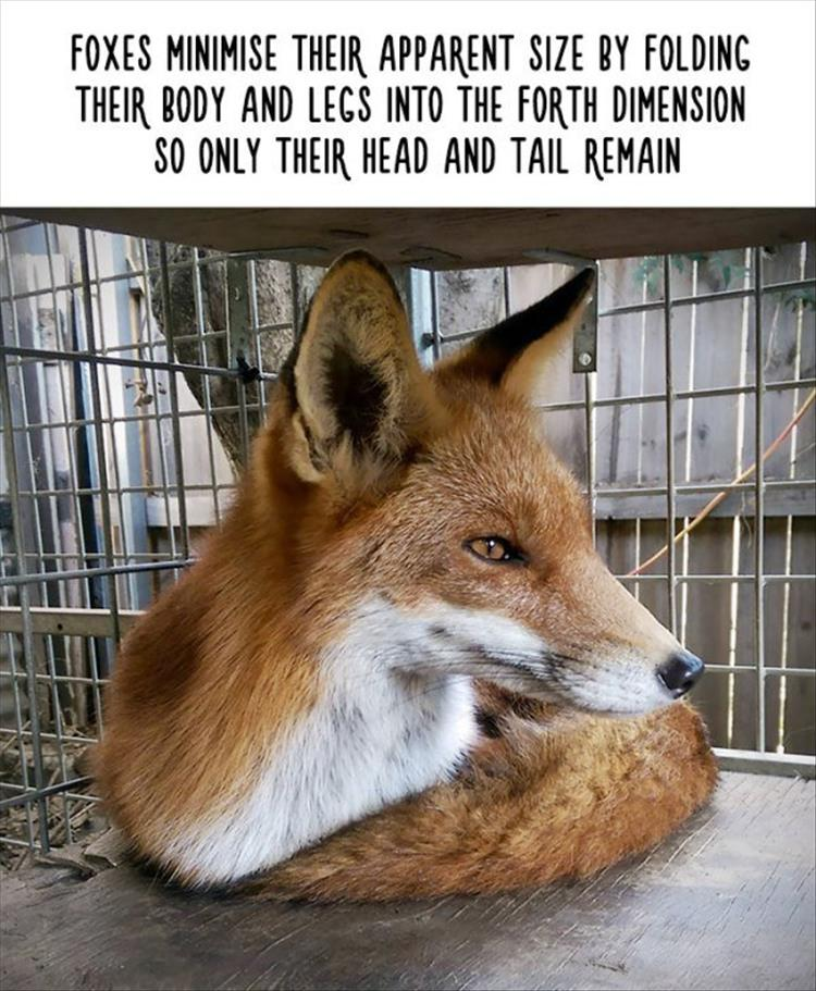 Amazing Animal Facts That Are Almost 100% True - 22 Pics