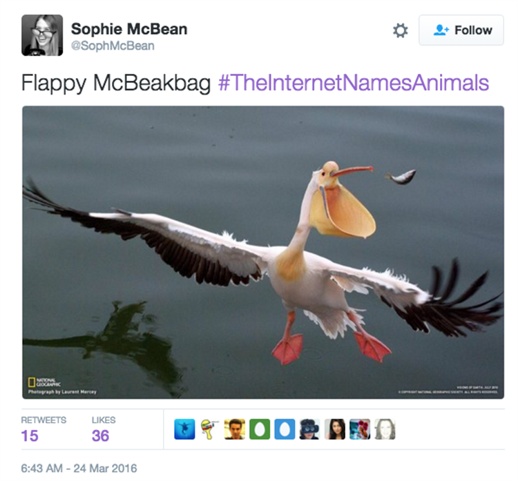 i m starting to wish the internet named animals 23 pics