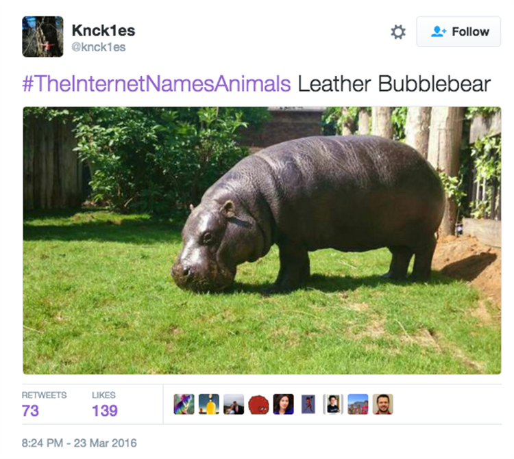 I'm Starting To Wish The Internet Named Animals - 23 Pics