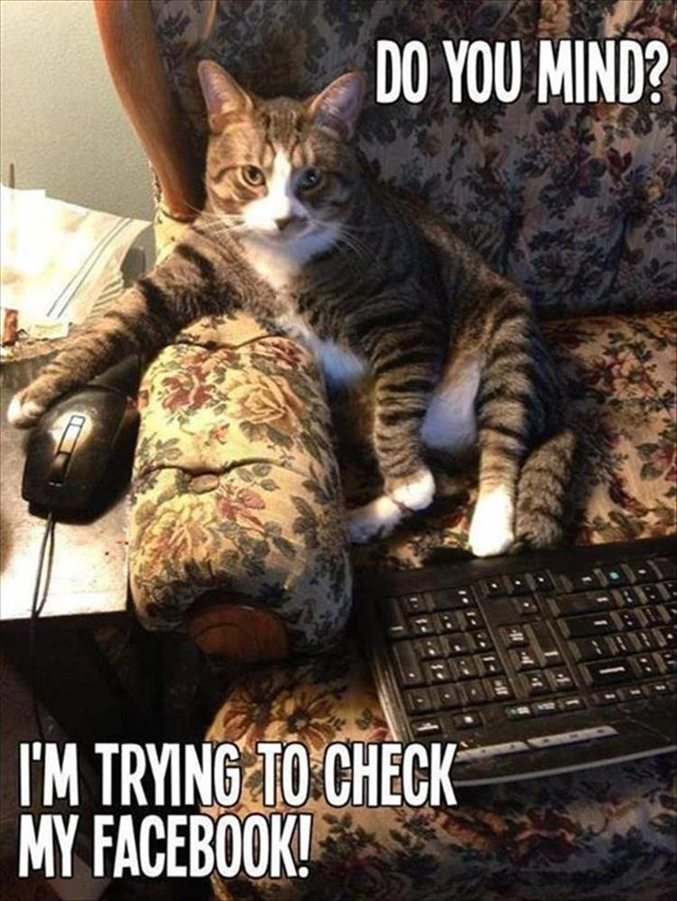 funny animal pictures (11)