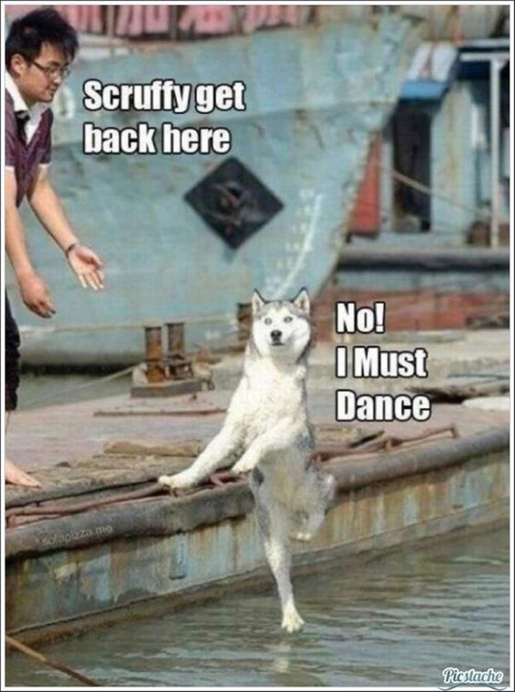 funny animal pictures (24)
