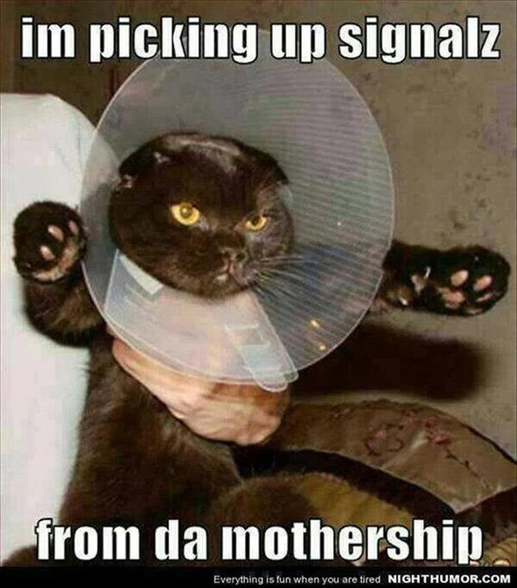 funny animal pictures (9)