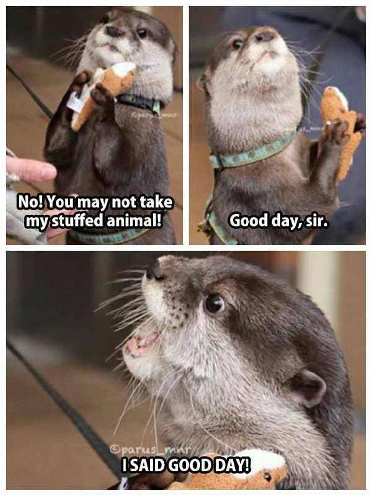 funny animals (11)