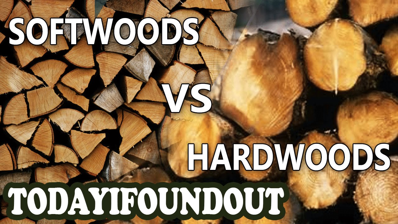 Erudition The Difference Between Hardwoods And Softwoods