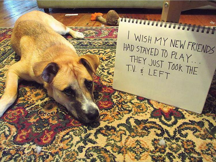 The Very Best Of Dog Shaming 16 Pics