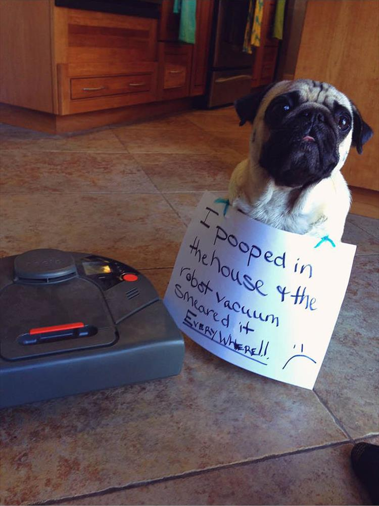 The Very Best Of Dog Shaming - 16 Pics