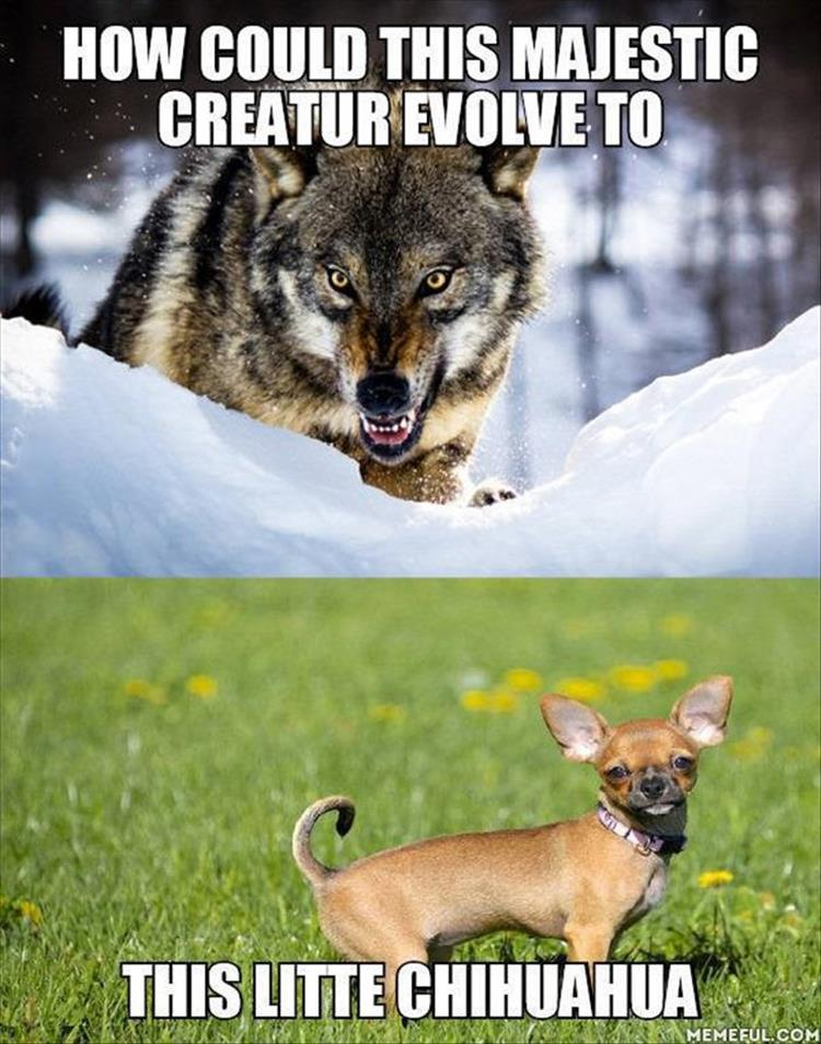 funny animal pictures (18)