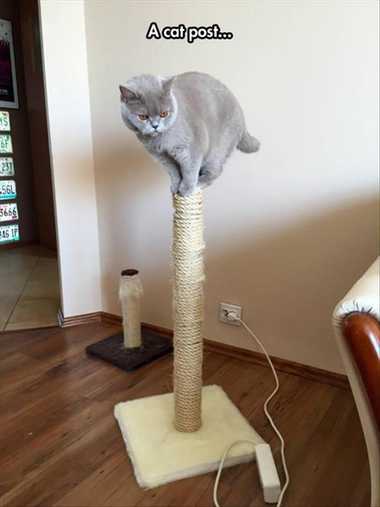 Cat Holding Scratching Post And Screaming