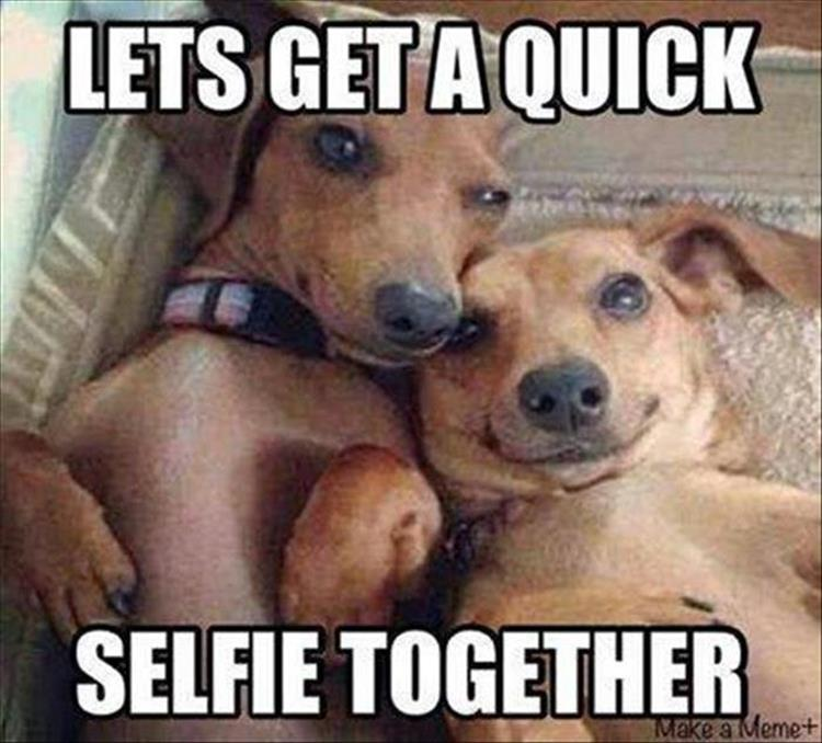 funny animal pictures (7)
