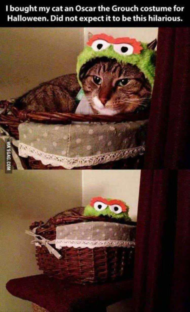funny animals (7)