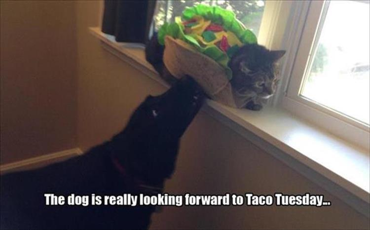 a-funny-animals-15