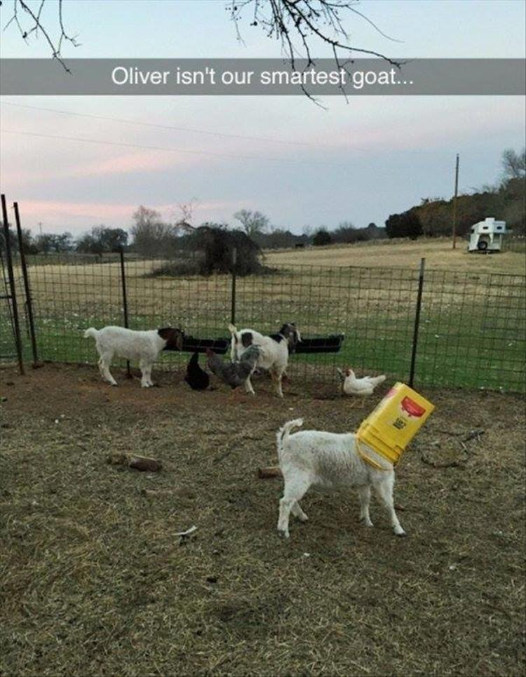 funny animal pictures (10)