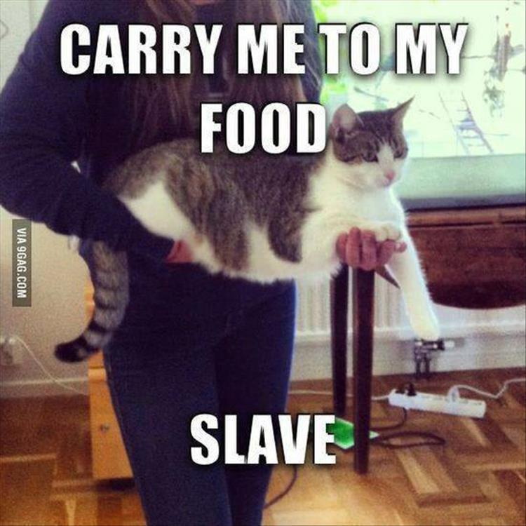 funny animal pictures (13)