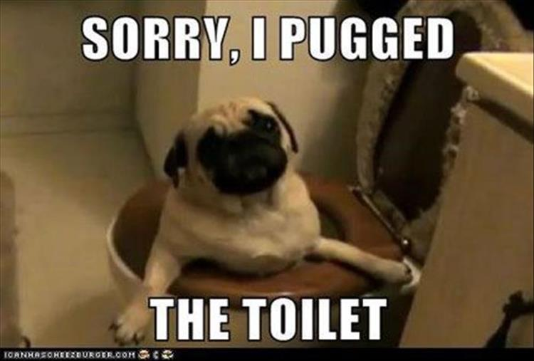 Funny I M Sorry Meme : Funny animal pictures of the day pics