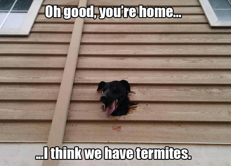 Funny Memes For Kids Animals : Funny animal pictures of the day 22 pics