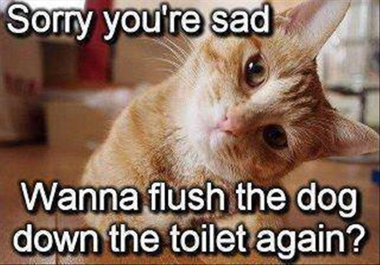 Funny Meme To Cheer Someone Up : Funny animal pictures of the day pics