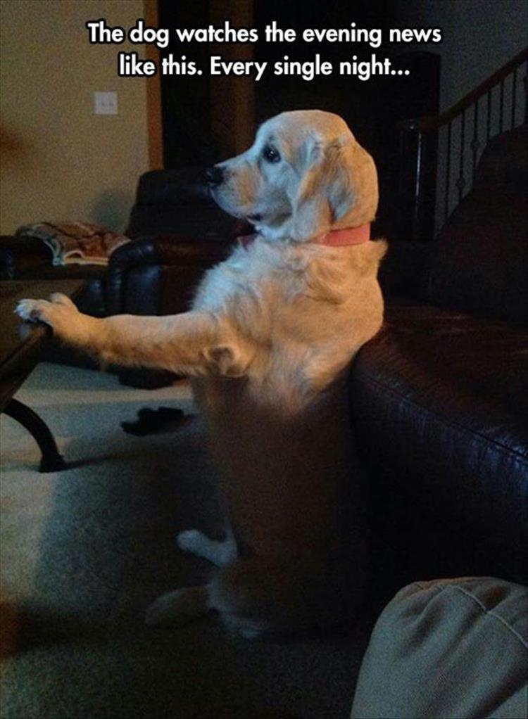 dog watches the news
