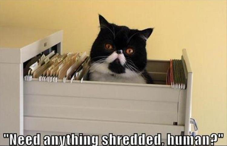 file cat funny animal pictures of the day 23 pics
