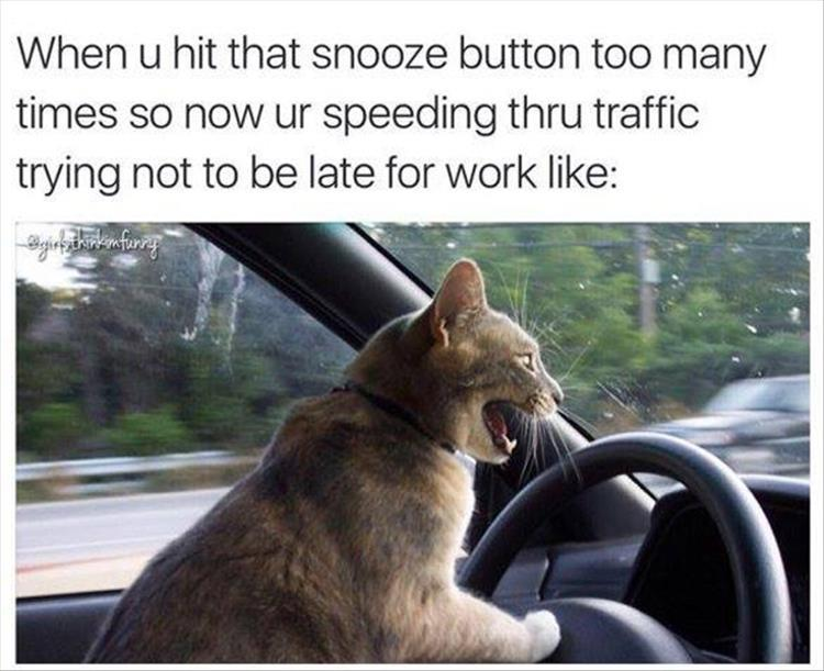Funny Late For Work Meme : Funny pictures of the day pics