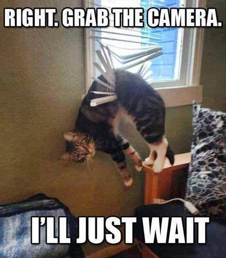 Funny Animal Friday Meme : Funny animal pictures of the day pics
