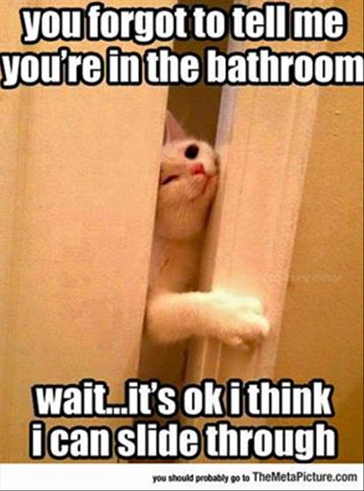 going to the bathroom with your pet