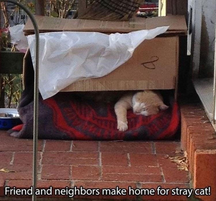 home for stray cats