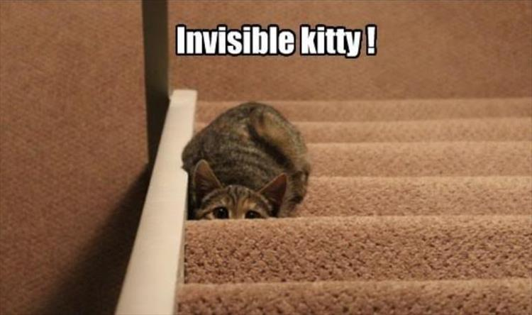 invisible kitty