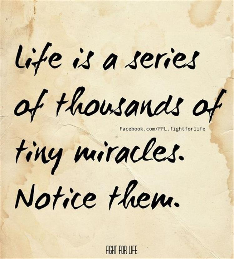 life is a series of tiny miracles, notice them