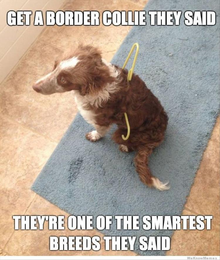 smart breeds of dog