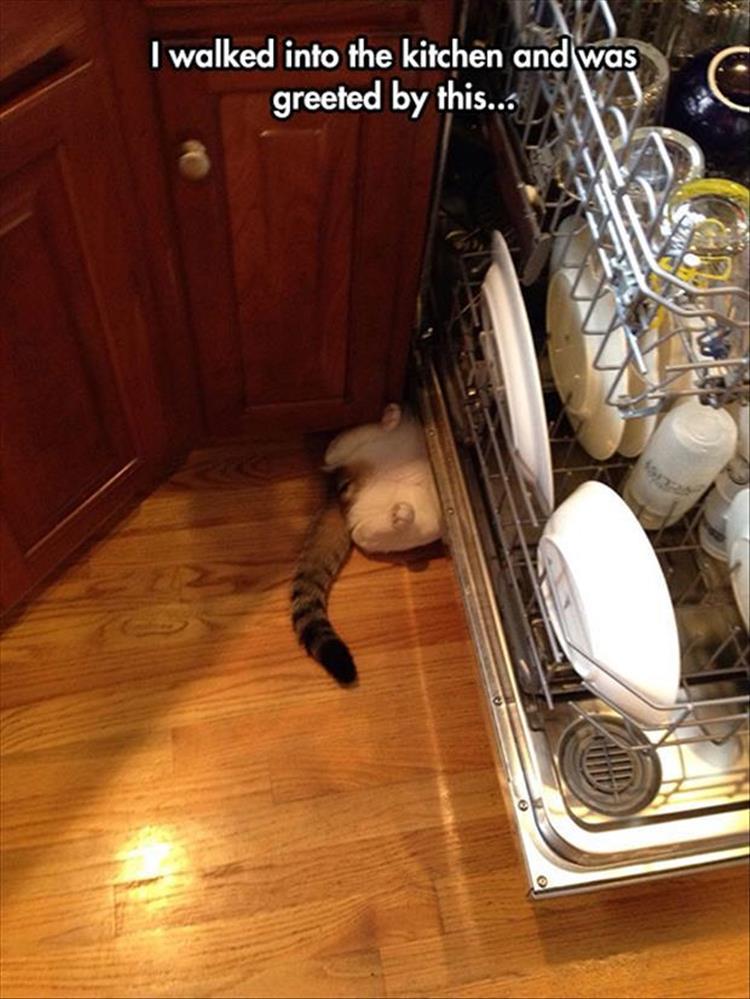 the cat is hiding