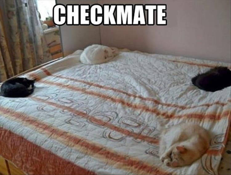the cats are on the bed again