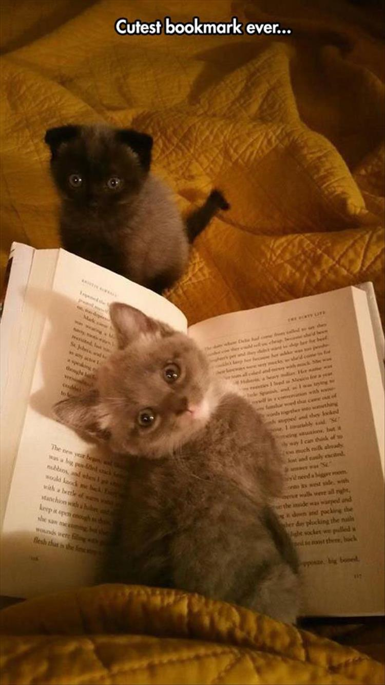 the cutest bookmark ever