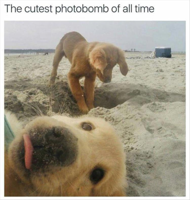the cutest photobomb of all time