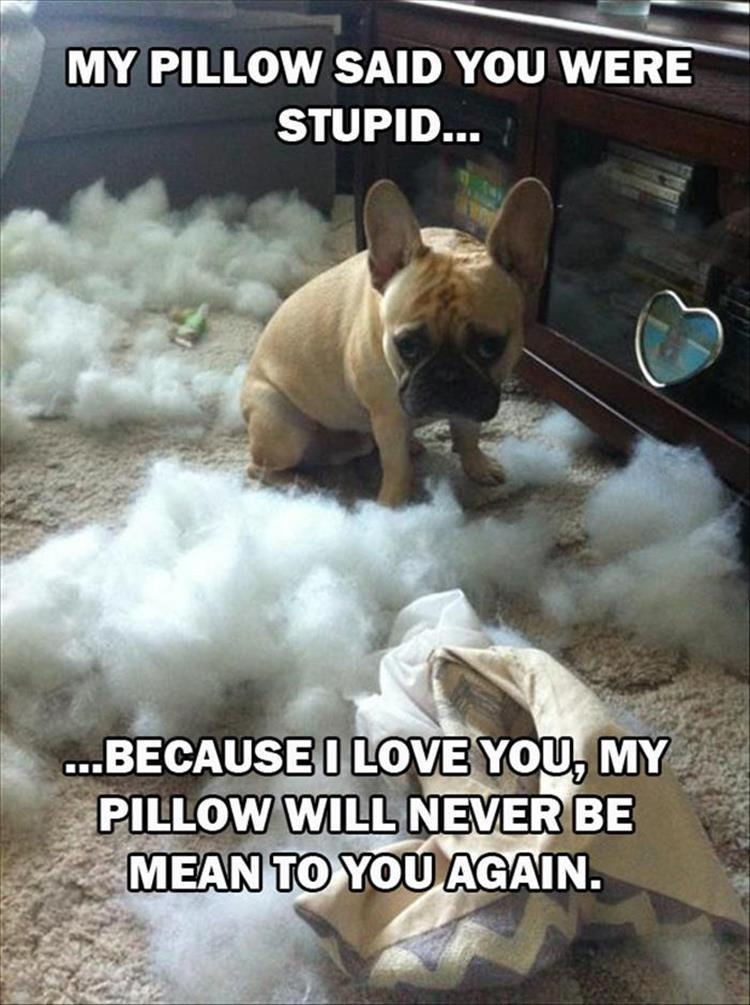 the dog ate the pillow