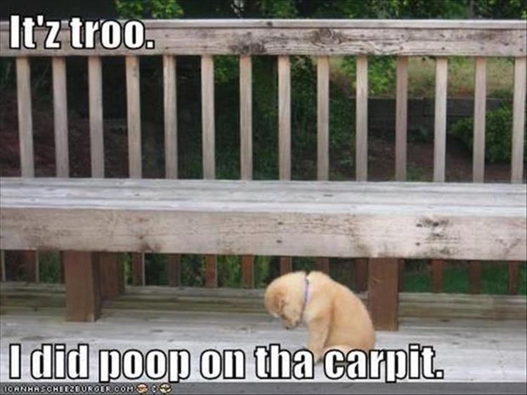 the dog poop on the carpet