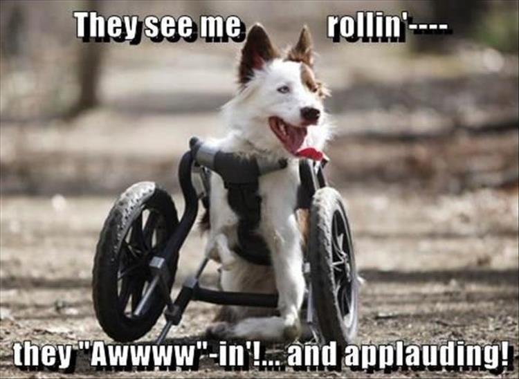 they see me rolling