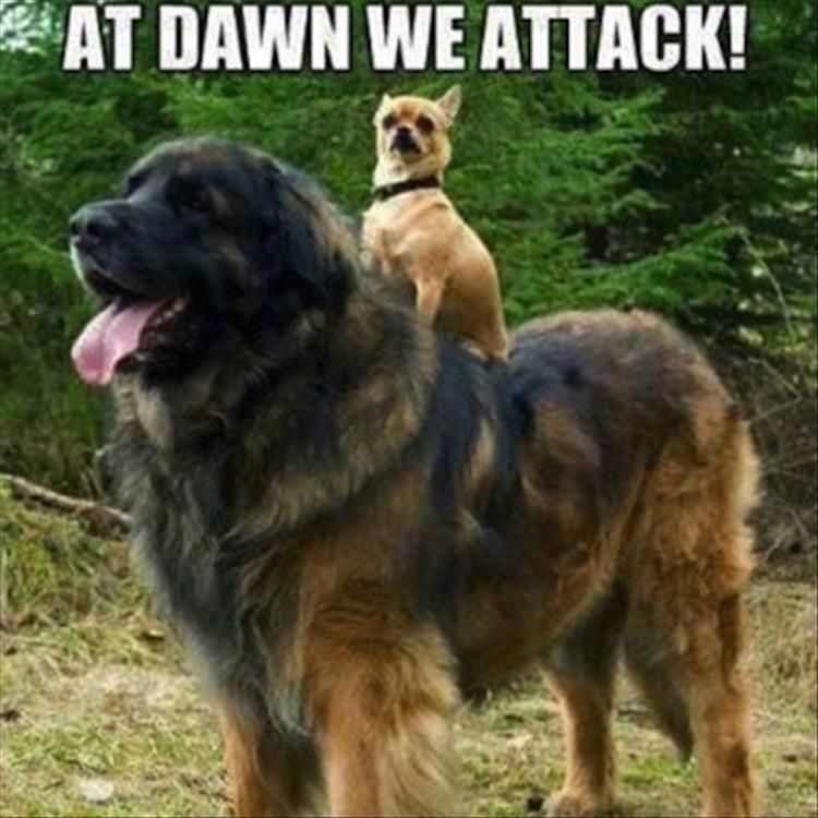 when dogs ride at dawn