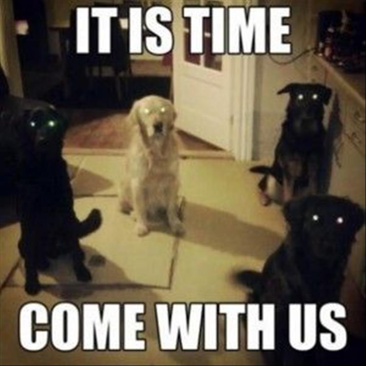 you need to come with us dogs