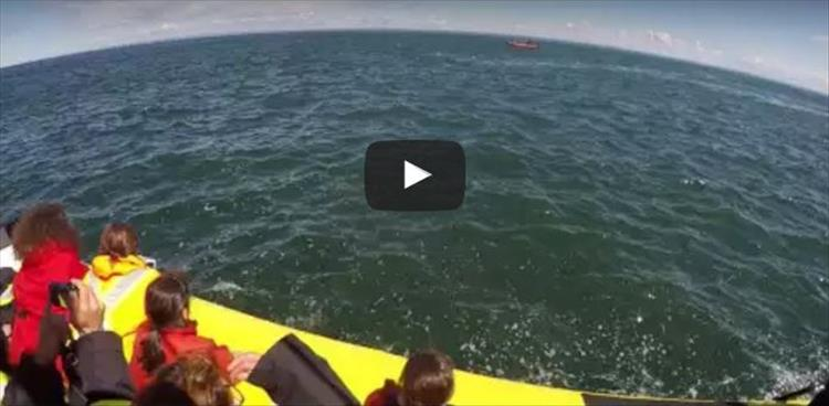 Huge Blue Whale Passes Directly Under A Boat Of Tourists