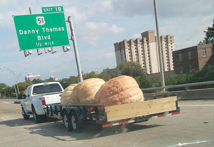 Largest Pumpkins ever
