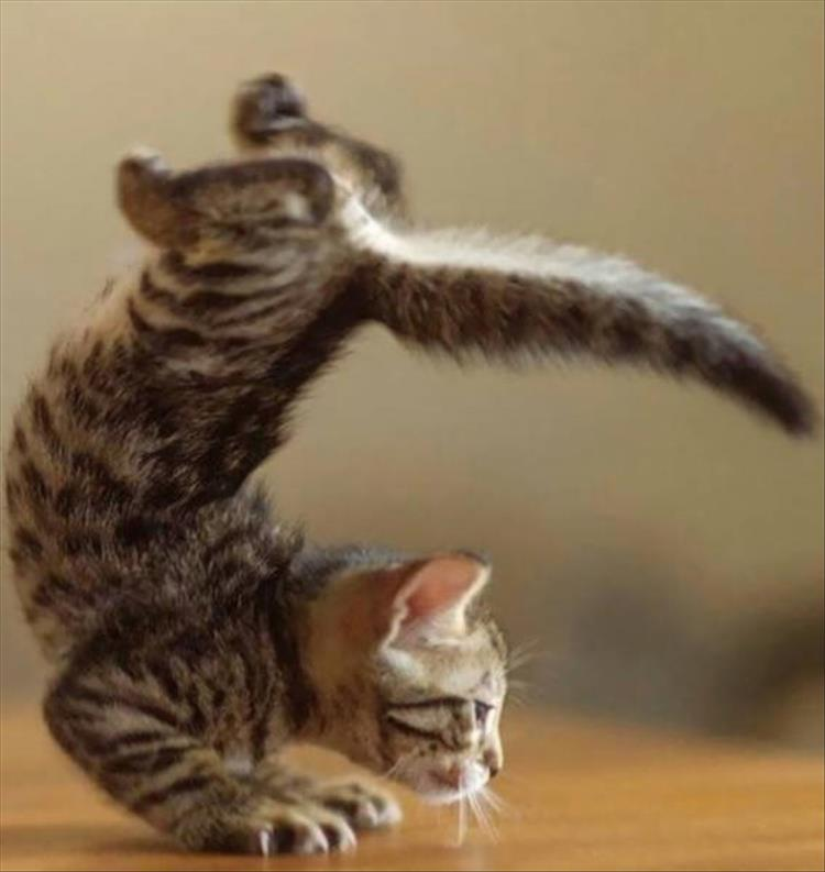 Funny Cat Images And Quotes