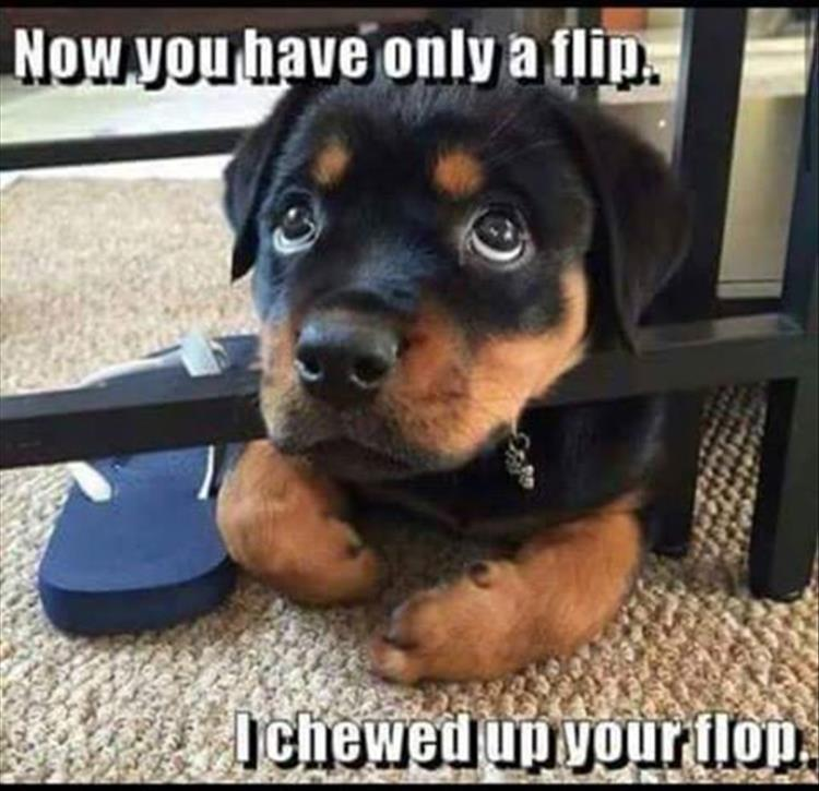 a dog chewed your flip flops
