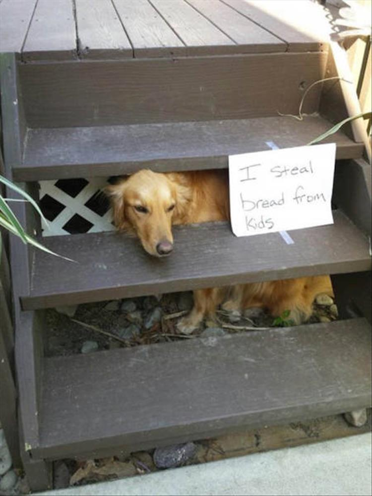 The Funniest Animal Shaming Pictures Of The Month 23 Pics