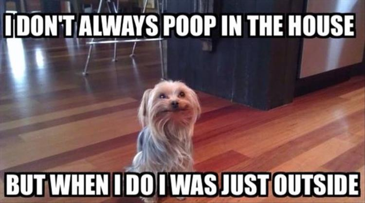 because the dog poops inside