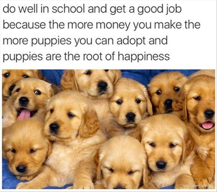 buying puppies
