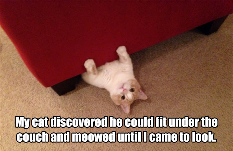 cat can fit under the couch